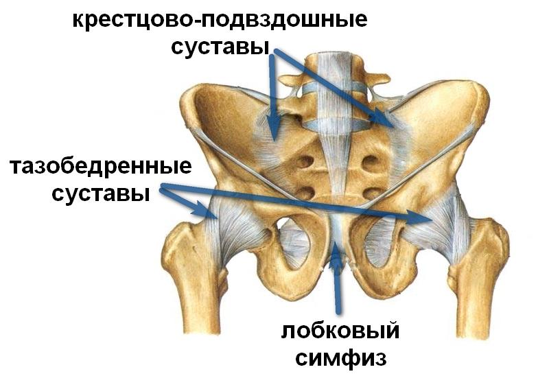 Почему болит лобковая кость при беременности и после